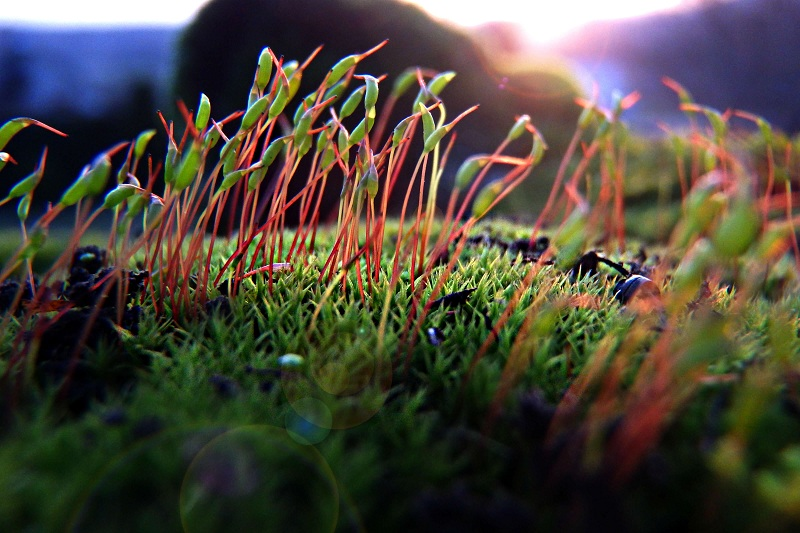 macro of moss with digital camera